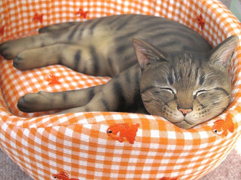 みゅうちゃん@愛用のベッドで